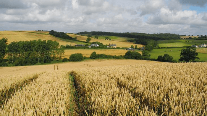 The Allerton Project teams up with Leicestershire County Council and the NFU to deliver a virtual Sustainable Farming and Food Chain Workshop.